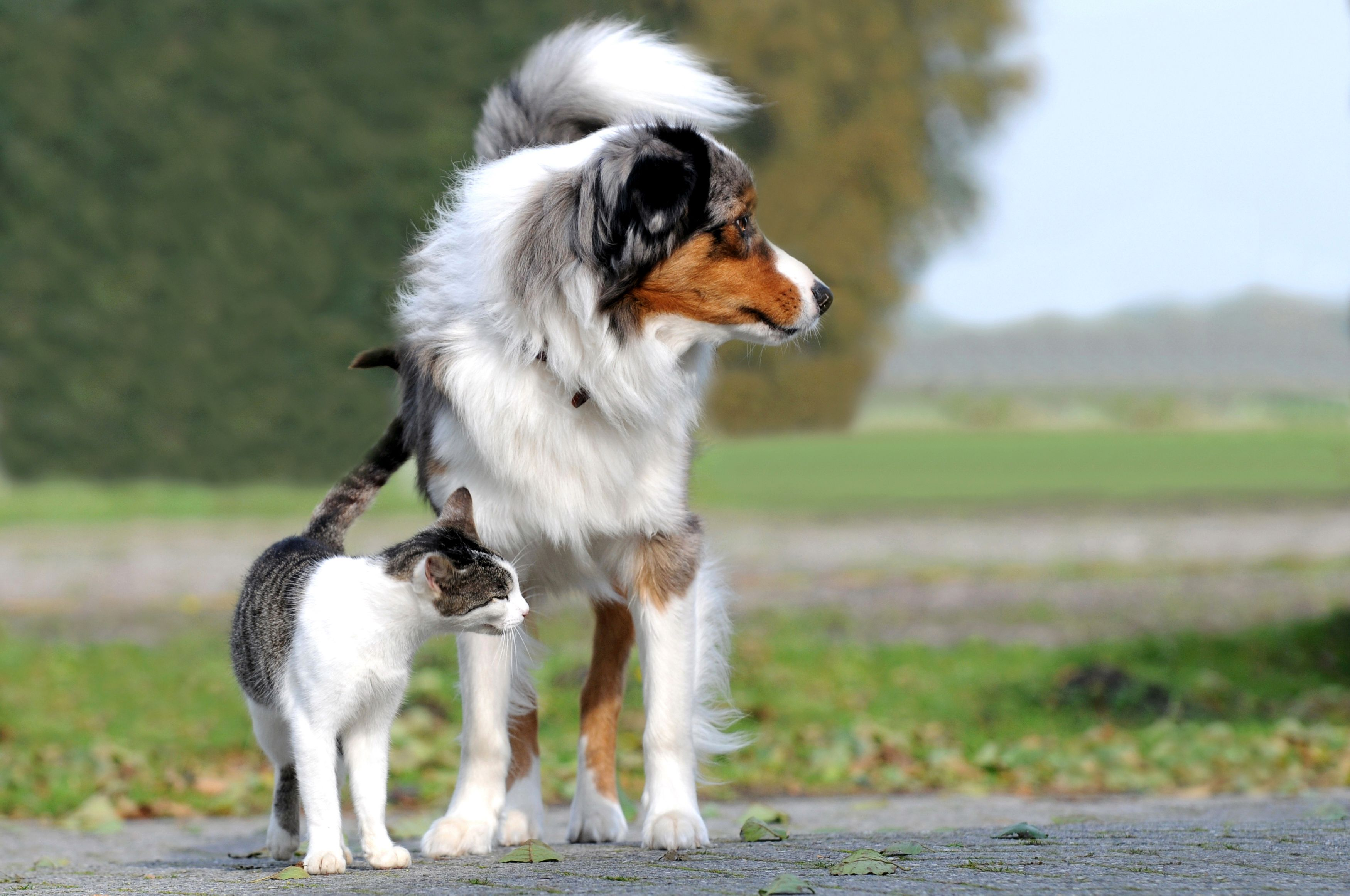 Discover 3 Underlying Causes Of Scoliosis In Dogs And Cats At