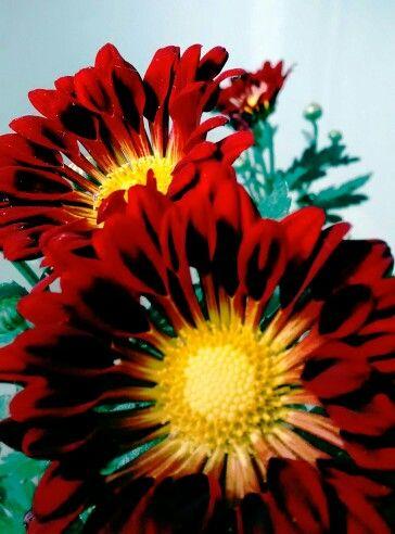 Flores de mi balcón...