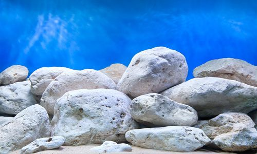 photo relating to Printable Fish Tank Background called Shiny Stone Record Fish Things Aquarium backgrounds