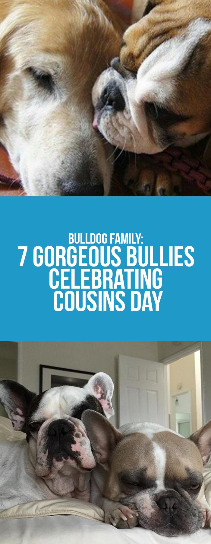 Bulldog Family 7 Bullies Celebrating Cousins Day