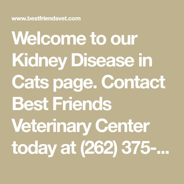 Pin On Kidney Disease Cat