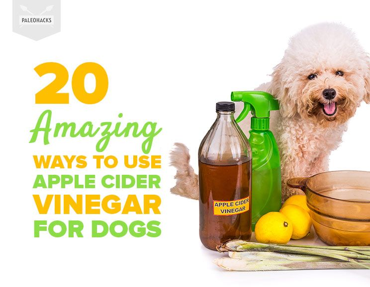 20 Amazing Ways To Use Apple Cider Vinegar For Dogs 6 Is Best