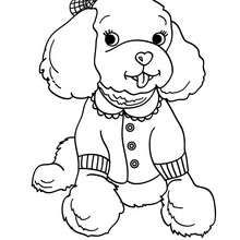 Delightful Poodle Coloring Page   Coloring Page   ANIMAL Coloring Pages   PET Coloring  Pages   DOG Coloring Pages   POODLE Coloring Pages