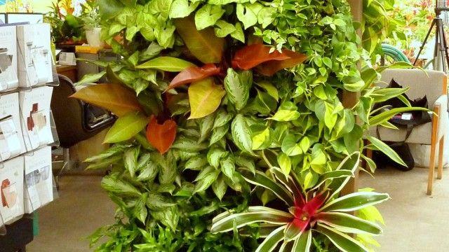 10 Best Plants To Grow For Vertical Garden