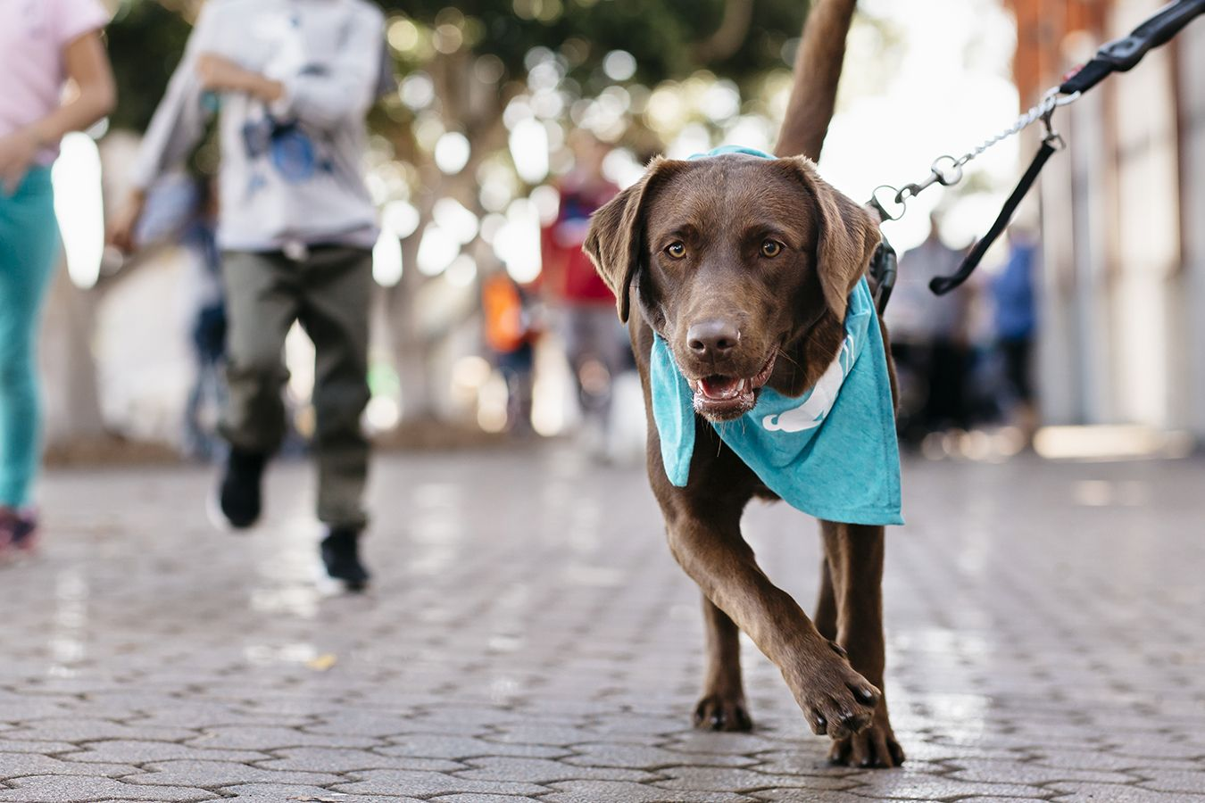 Rspca Million Paws Walk 2019 May 19 Australian Dog Lover With Images Dogs Day Out Fight Animal Cruelty Dog Lovers