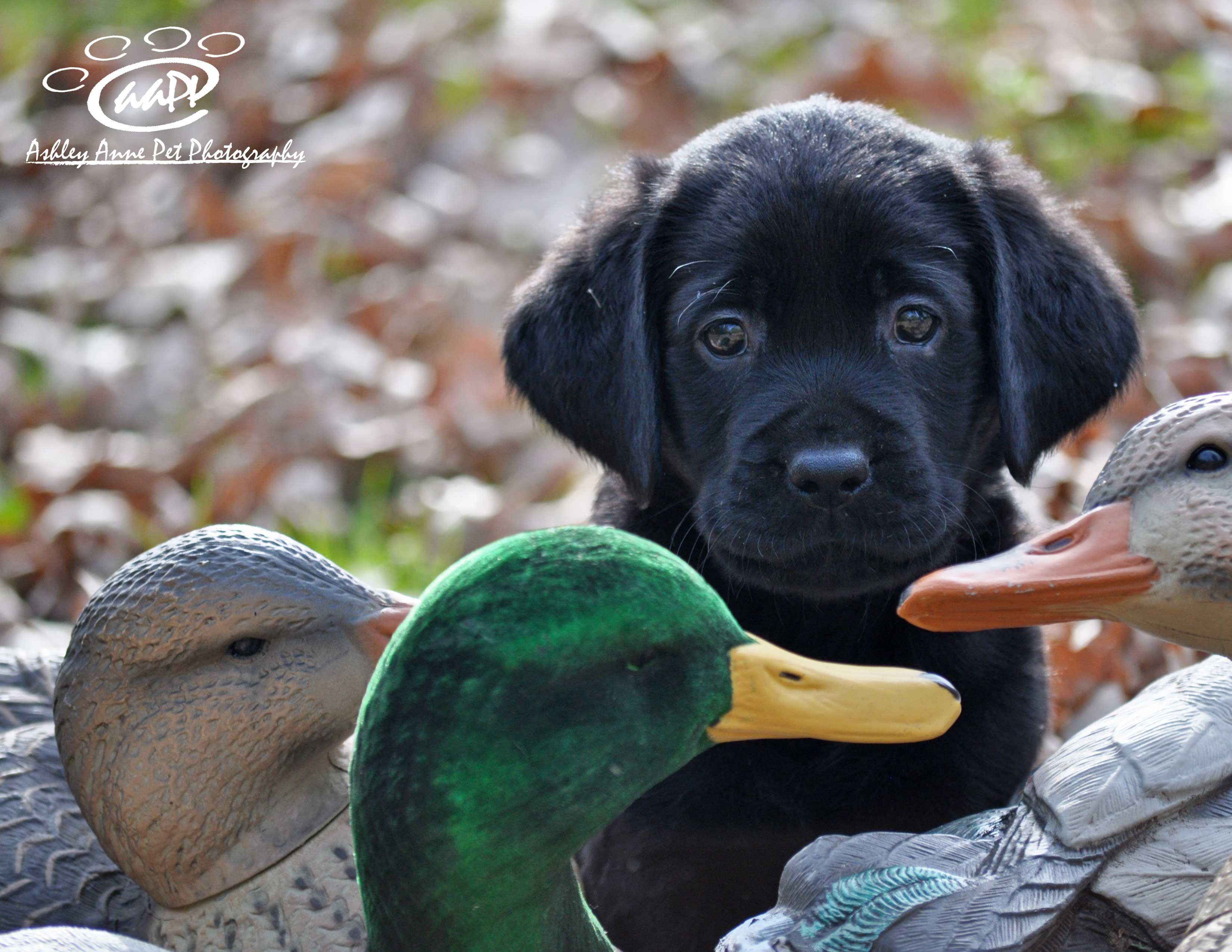 Cool Duck Hunting Dog Names