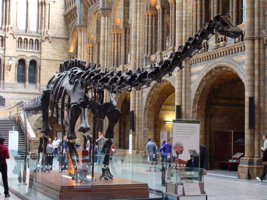 5001d9dd4d640521d1a082f38538aa01 - How Do I Get To The Museum Of Natural History