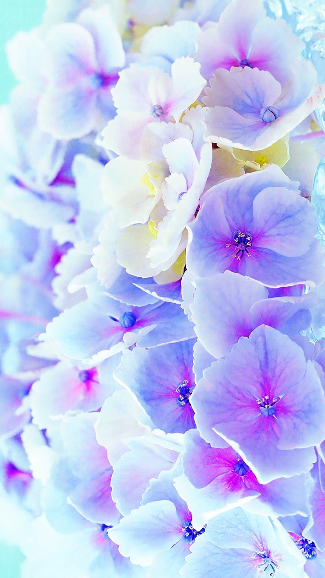 Pin by Sofiya Aleksandrova on Amazing Flower wallpaper