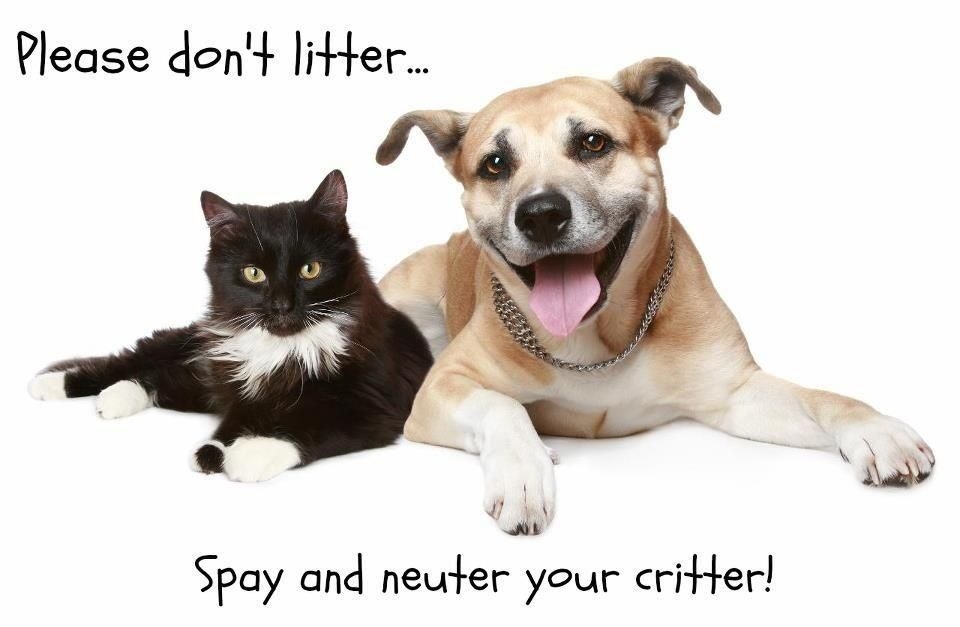 Spay and neuter..... Pets, Toxic plants for cats, Cats
