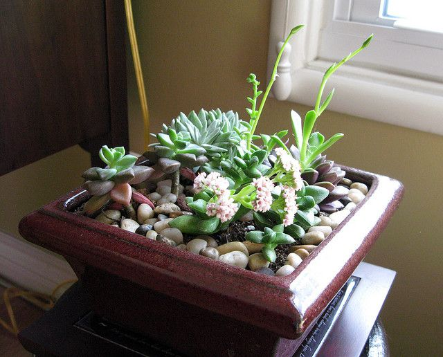 Indoor Cactus Garden Indoor cactus garden great outdoors pinterest indoor cactus indoor cactus garden lots of cacti i am so fond of cacti and succulents workwithnaturefo