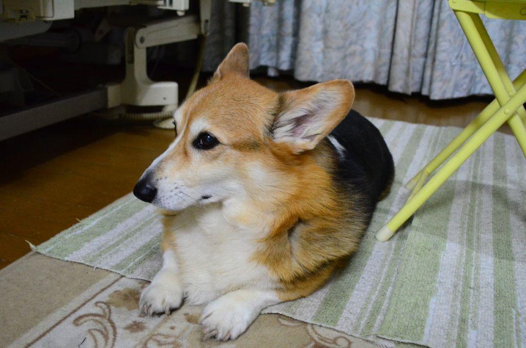 フロントラインプラスとスポットオンの違いは 獣医さんに聞いてわかった効果や使い方を徹底解説 獣医 犬 マダニ