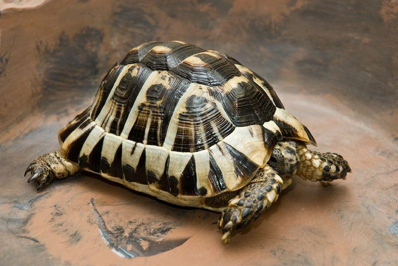 Tortoise. | Animals | Pinterest | Tortugas, Animales disecados y ...
