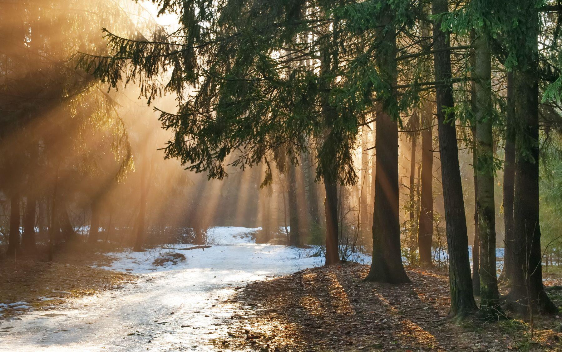 В начале марта #Весна #Март #Природа#Весна #Март #Природа Photographer:  Александр Гвоздь | Пейзажная фотография, Пейзажи, Идеи озеленения