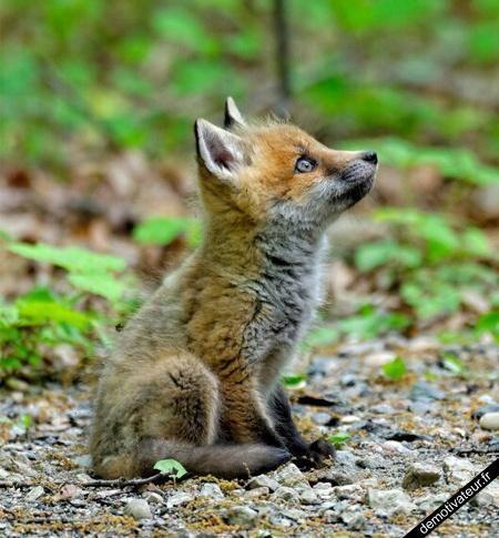 Tellement mignon animal 39 s cute animals animals et - Animal mignon ...