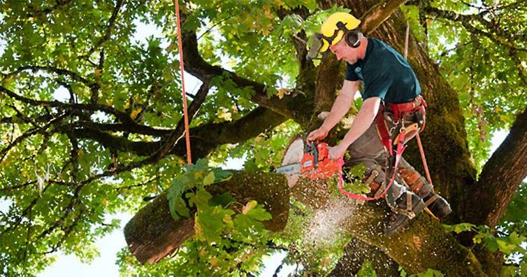 Tree Lopping Tree Lopping Is The Reducing Of Tree Branches That Do Not Play Any Terminal Function Tree Trimming Service Tree Service Tree Removal Service