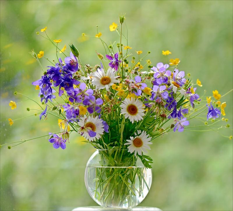 Букеты полевые цветы макросъемка
