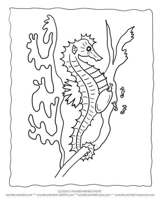 Free Seahorse Coloring Page Collection at www.wonderweirded-wildlife ...