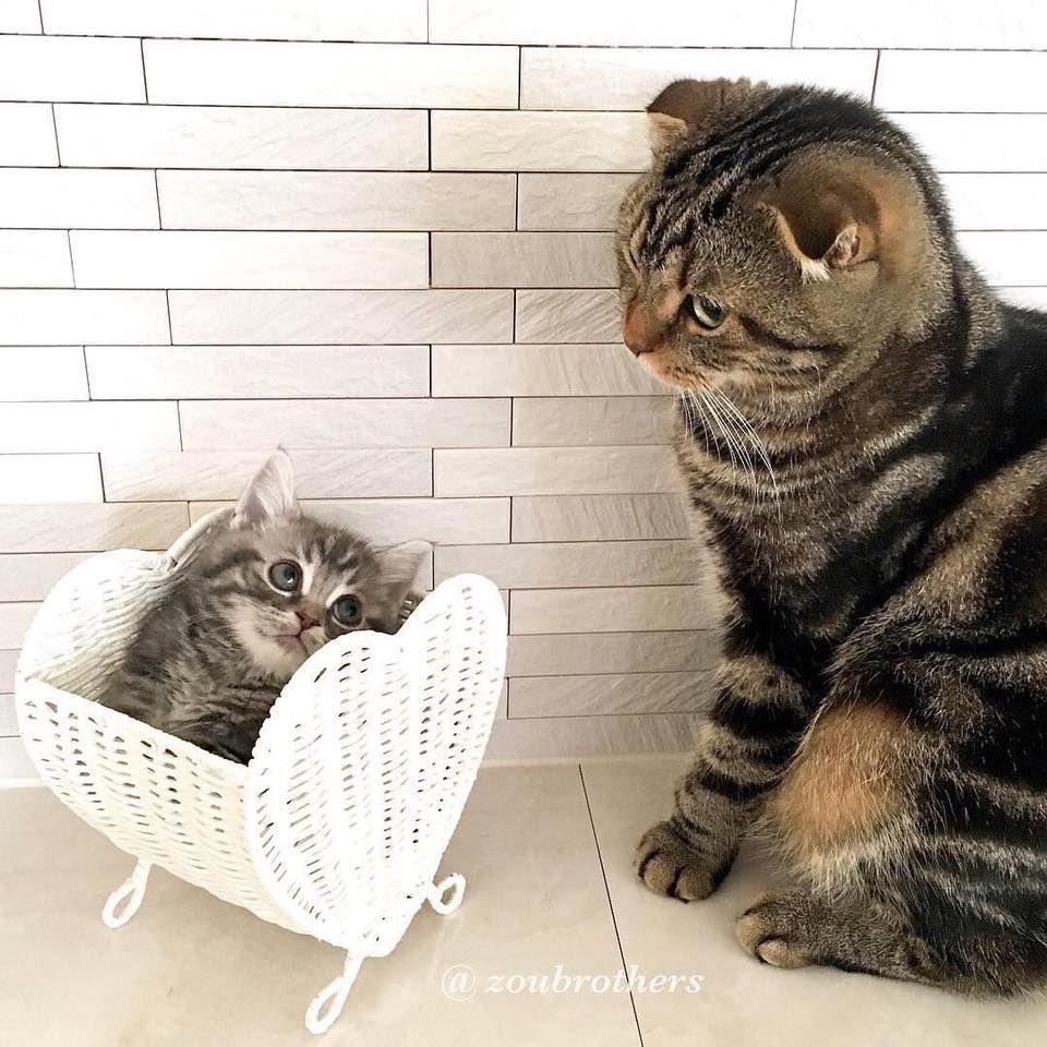 40086243 1171560573020499 9194877286782861312 N Jpg 960 960 Cute Cats Kittens Cutest Cats