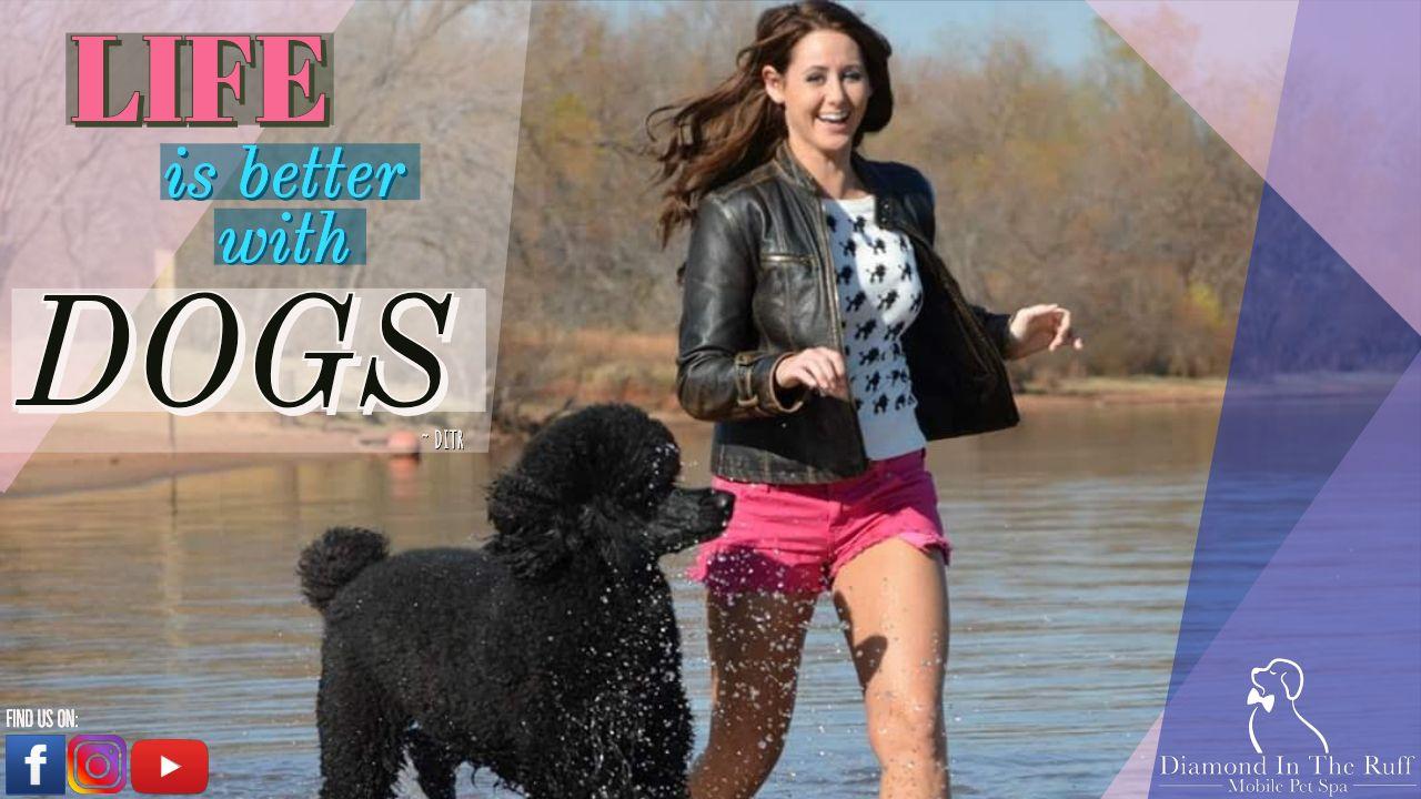 Social Media Post For Diamond In The Ruff Mobile Pet Spa Dog
