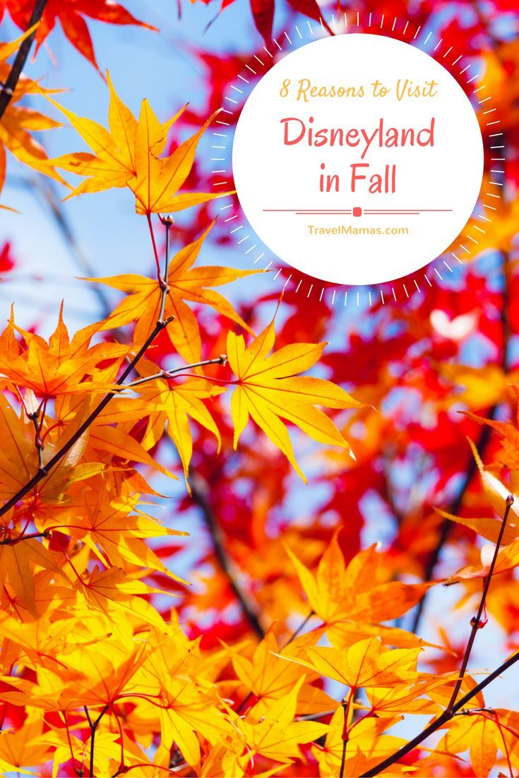 8 Reasons To Visit Disneyland In Fall It S Not Just Pumpkins And Halloween Either I Bet 8 S Disneyland Halloween Time At Disneyland Disney Vacation Planning