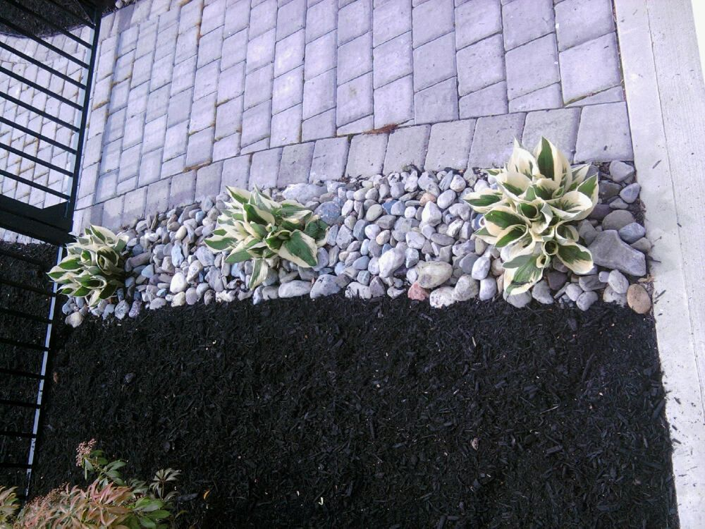 Use drought tolerant plants river rock and mulch easy for Easy to maintain bushes