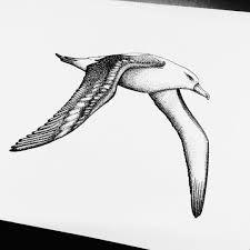 Image Result For Albatros Tattoo Tattoos Sleeve Tattoos