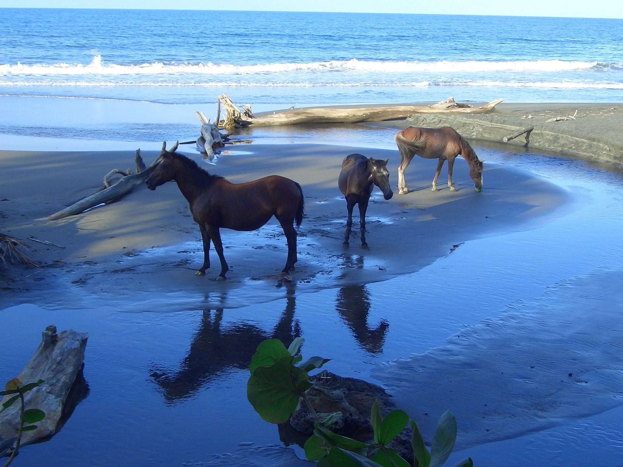 Great Wallpaper Horse Beach - 5006f2e45ada2a5a7f82c3d942131a55  Pictures_135785.jpg