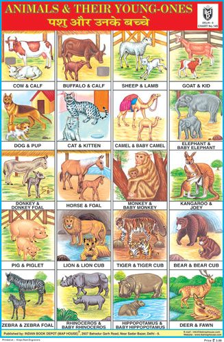 Animals Charts Indian Book Depot Map House Young Ones Of Animals Preschool Charts Young Ones