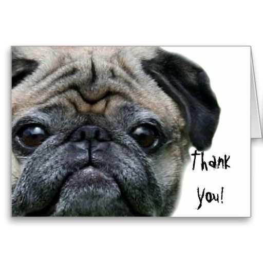 Thank You Pug Greeting Card Zazzle Com Happy Birthday Pug