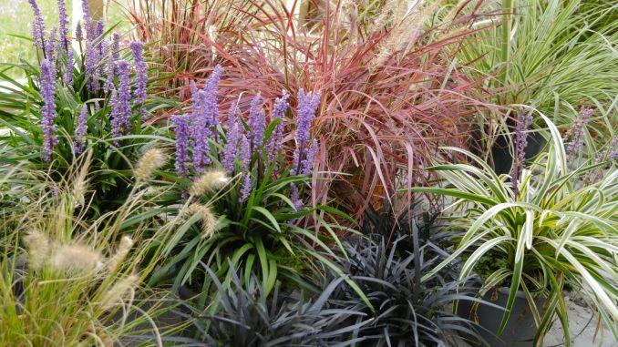 Staude küchen ~ Winterharte gräser und stauden schneiden