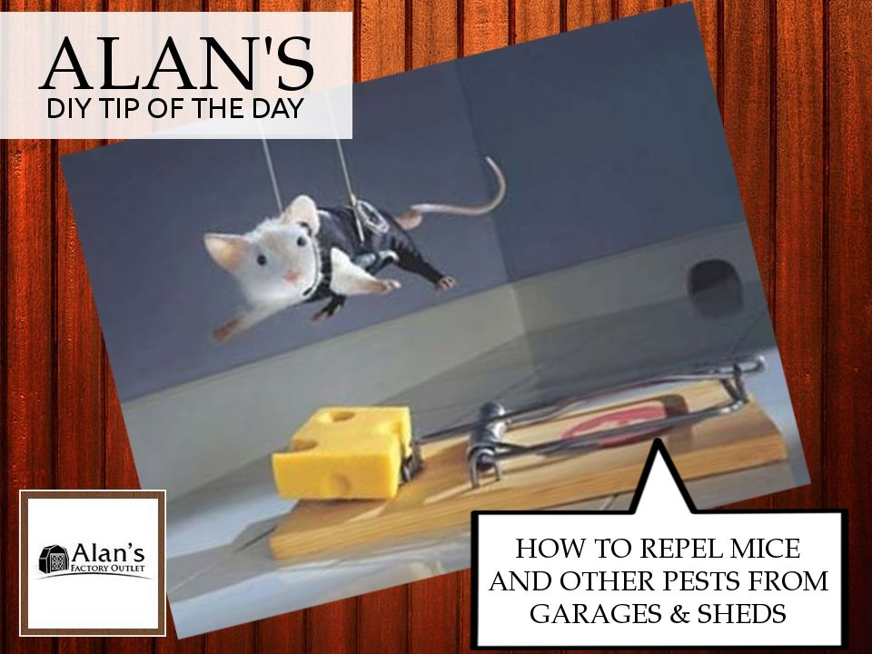 How To Repel Mice And Other Pests From Sheds Or Garages Mice Repellent Shed Metal Garages
