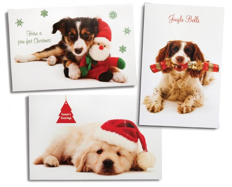 Dog Christmas Cards Google Search Doggie Pics And