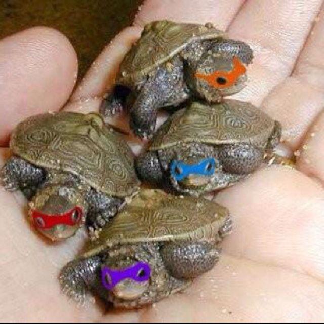 I LOVE ALL TURTLES!! :)