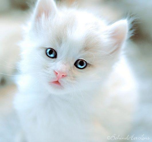 صور قطط باقة مختارة من أروع و أجمل القطط مع خلفيات Hd Kittens Cutest Cute Animals Pets