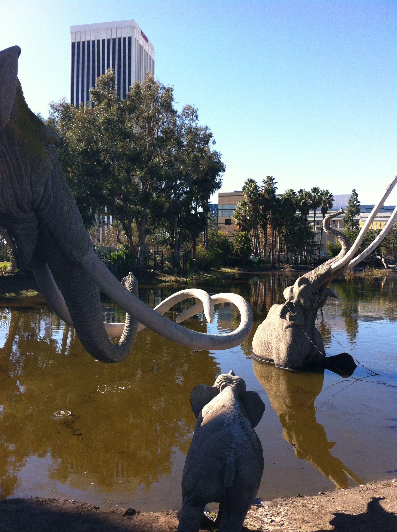 La Brea Tar Pits Los Angeles Great Places Los Angeles History Daycation