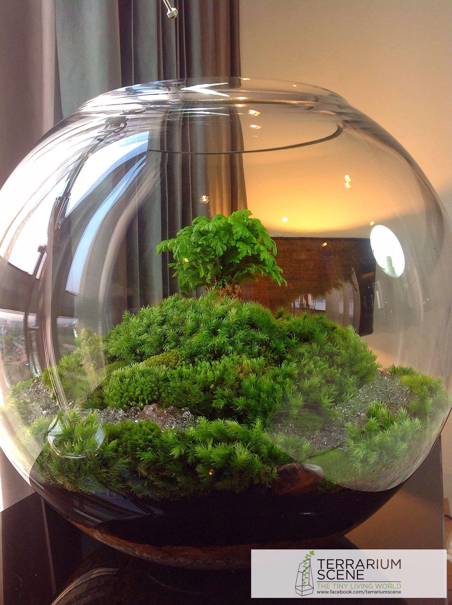 terrariums terrarium pinterest terrarium jardins et mini jardins. Black Bedroom Furniture Sets. Home Design Ideas