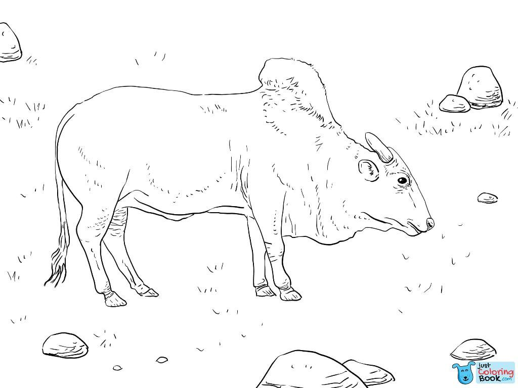 Top Printable Brahma Bull Coloring Pages