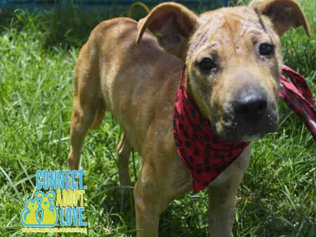 Pin On Adopt Foster Donate Save A Life Of A Homeless Pet