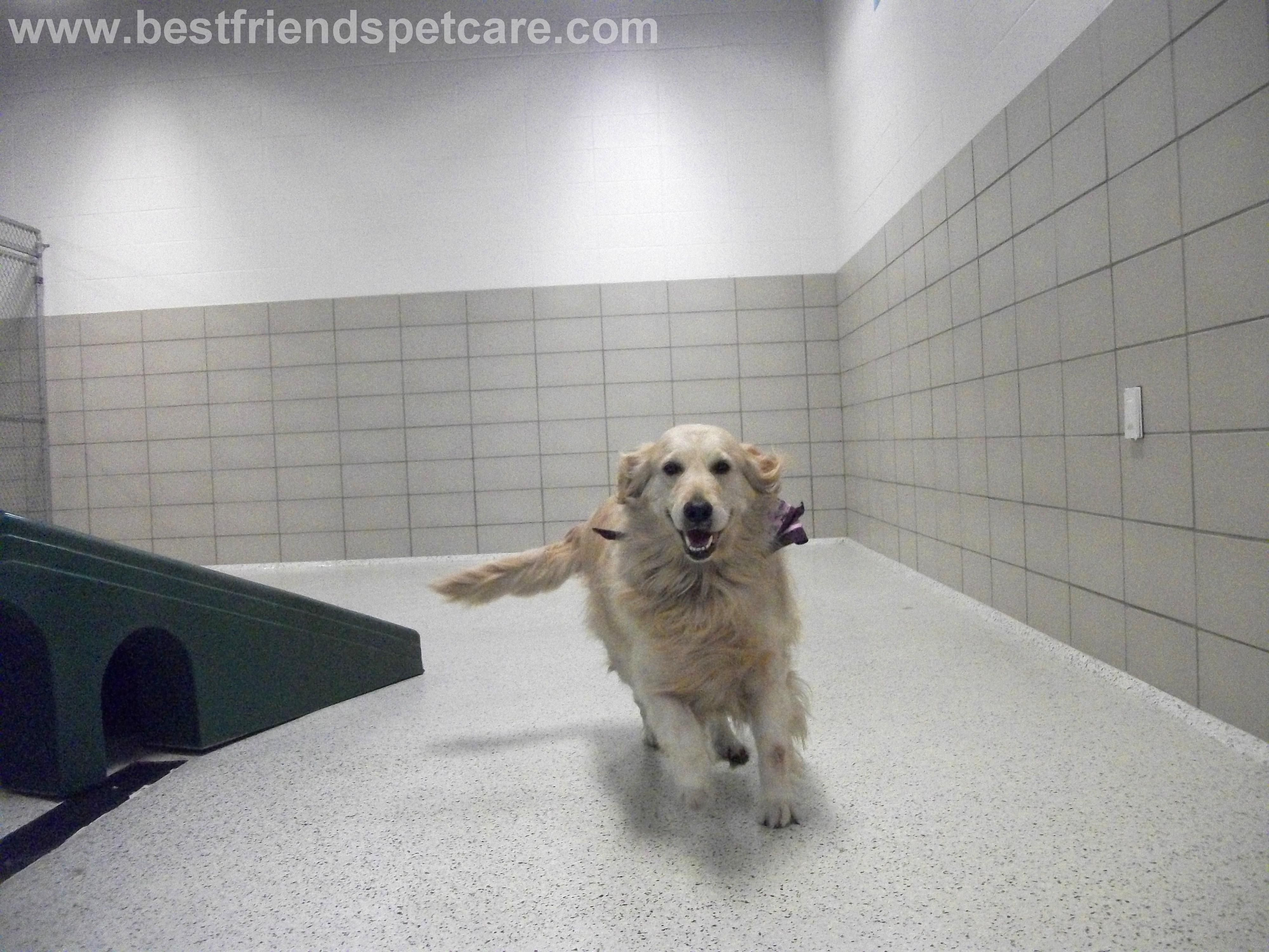 Sage Having Fun While On Vacation At Disney Best Friends Pet With