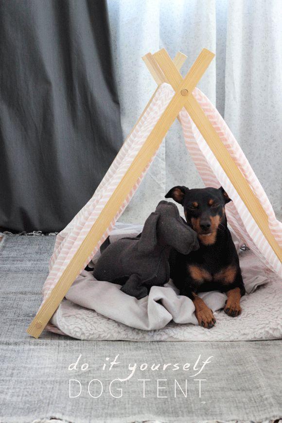 I love all things diy home decor doggie style pinterest doggies do it yourself dog tent solutioingenieria Choice Image