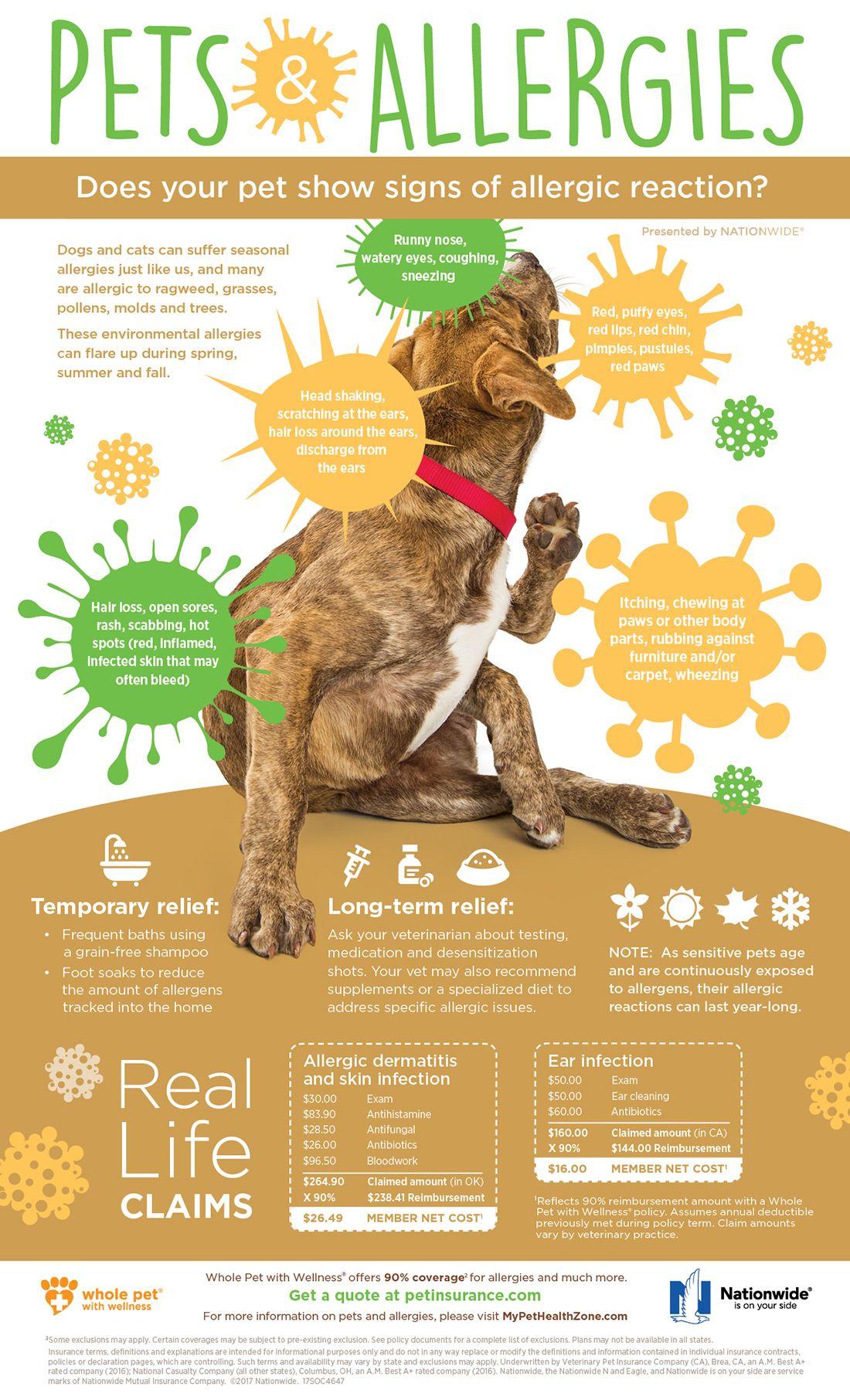 Superstarmobilegrooming Miami Florida Pets Dogs Petcare