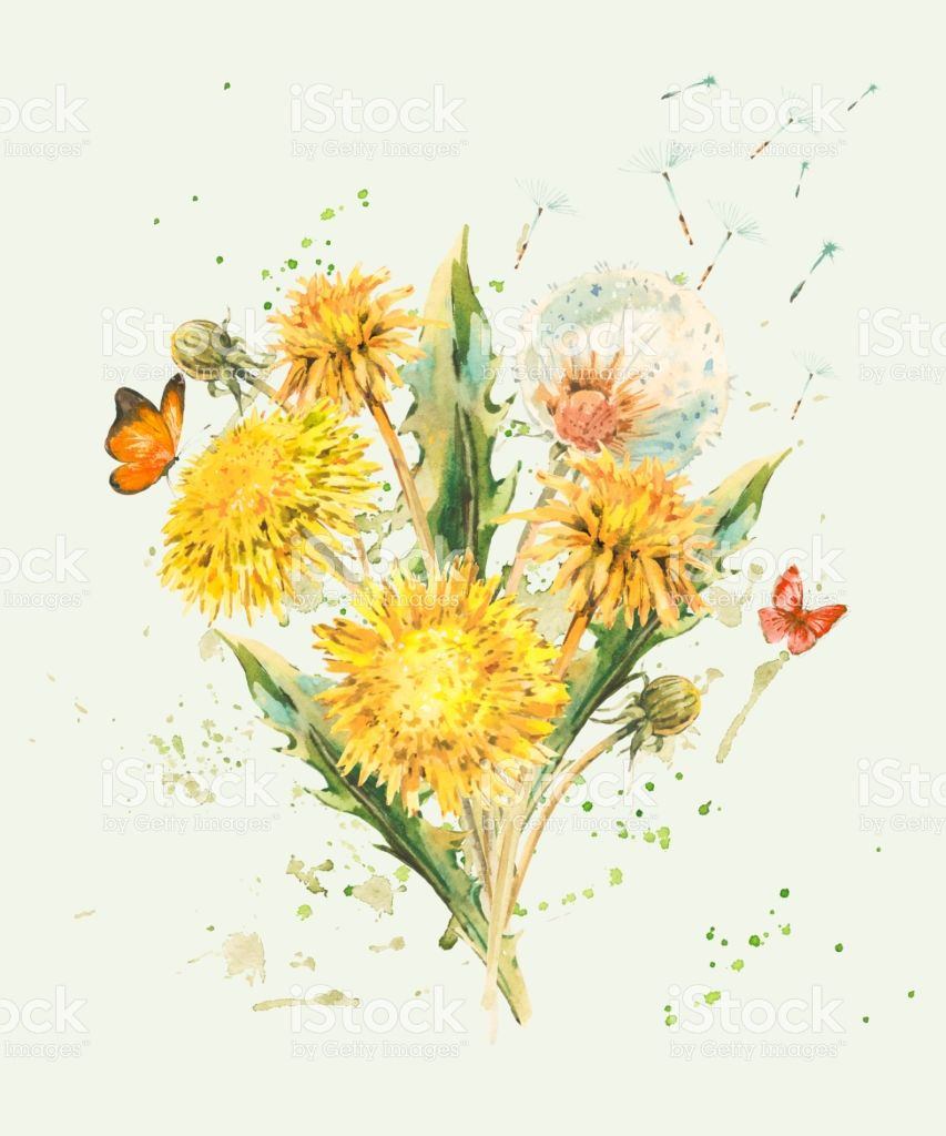 Watercolor Spring Flowers Of Yellow Dandelions Royalty Free Watercolor Spring Flowers Of Yellow Da Dandelion Art Dandelion Painting Watercolor Dandelion Tattoo