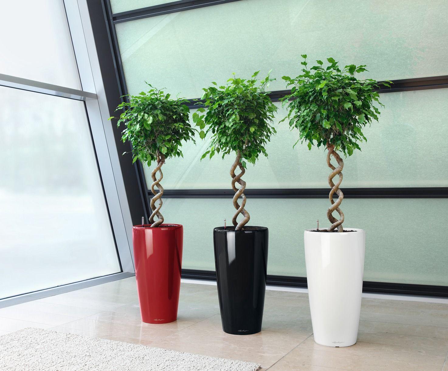 Przedstawiam 10 Roslin Ktore Szczegolnie Nadaja Sie Do Biur Rosliny Te Sa Malo Wymagajace I Kazdy Poradzi Sobie Self Watering Planter Tall Planters Planters