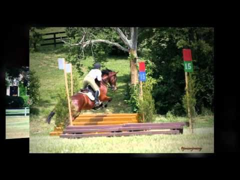 American Saddlebred versatility.  It's the Horse...not the tack!   Saddlebreds can do it all!