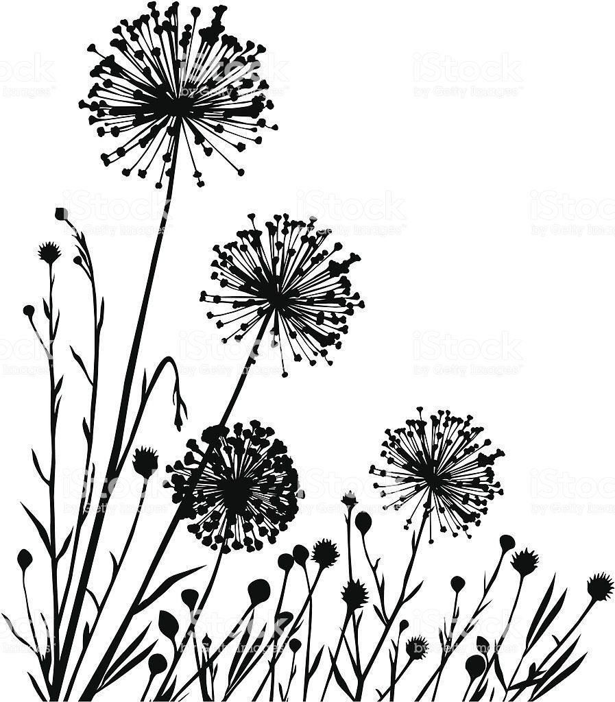 summer meadow with variable plants blumenzeichnungen blumen zeichnung blumenzeichnung paket vektor zebra