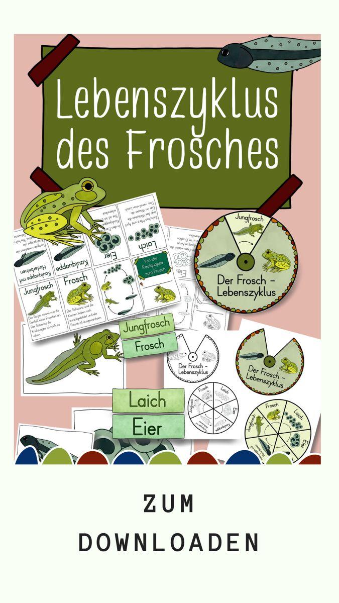 Lebenszyklus des Froschs - ausführliches Material - Chalk and Coffee
