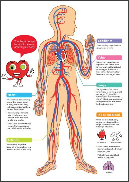 CHSH Circulatory System Teaching Materials Resources Science