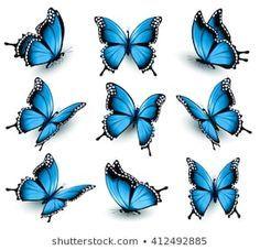Butterflies: изображения, стоковые фотографии и векторная графика
