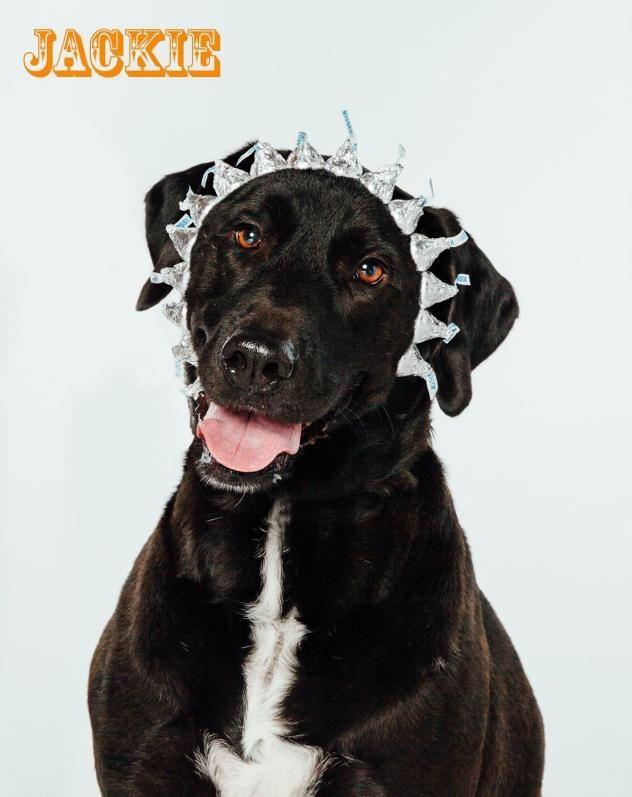 Adopt Jackie On Petfinder Black Dog Dogs Black Labrador Retriever