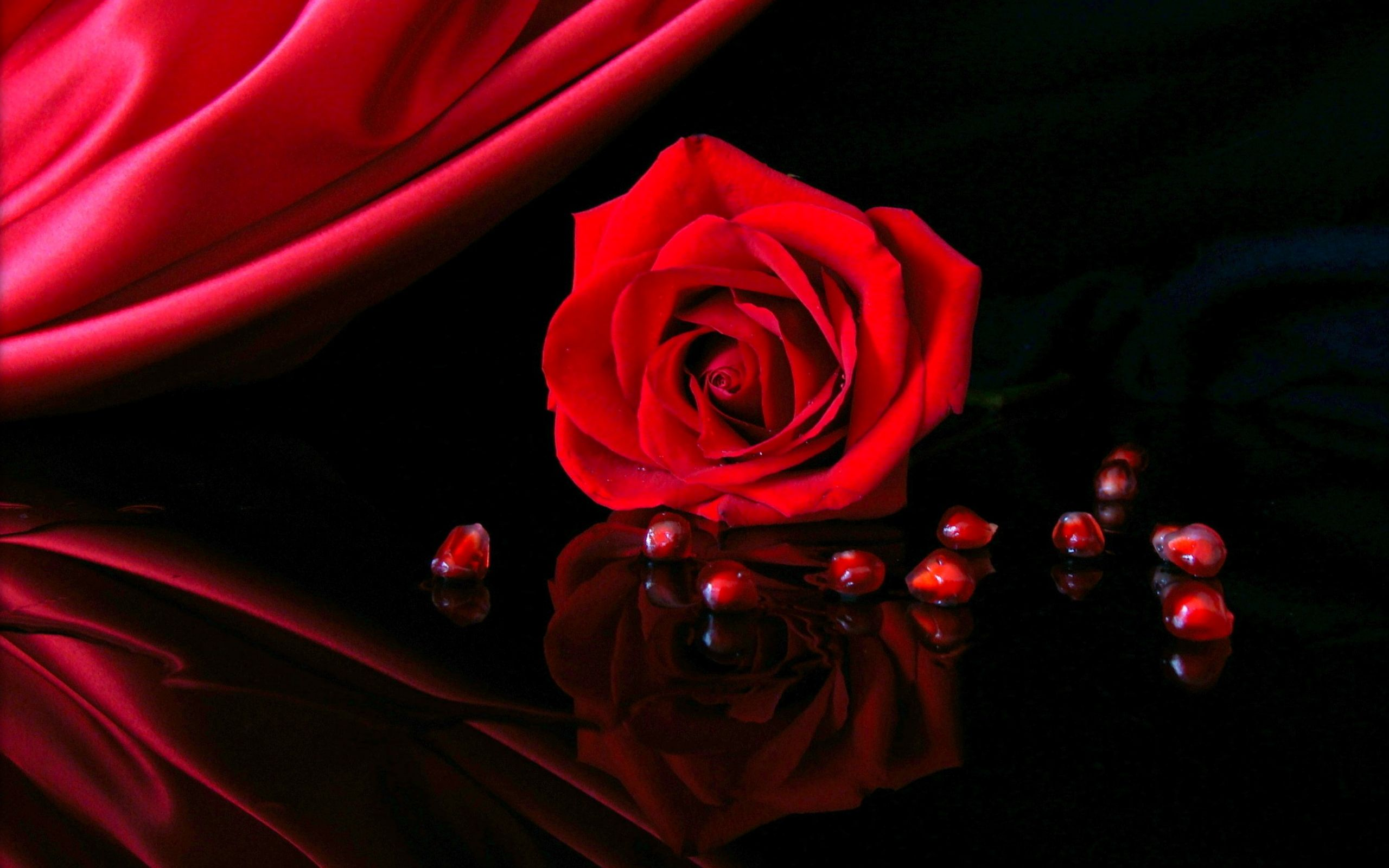 Free Wallpapers Red Rose Love Single Fresh Flowers 1200800 Rose